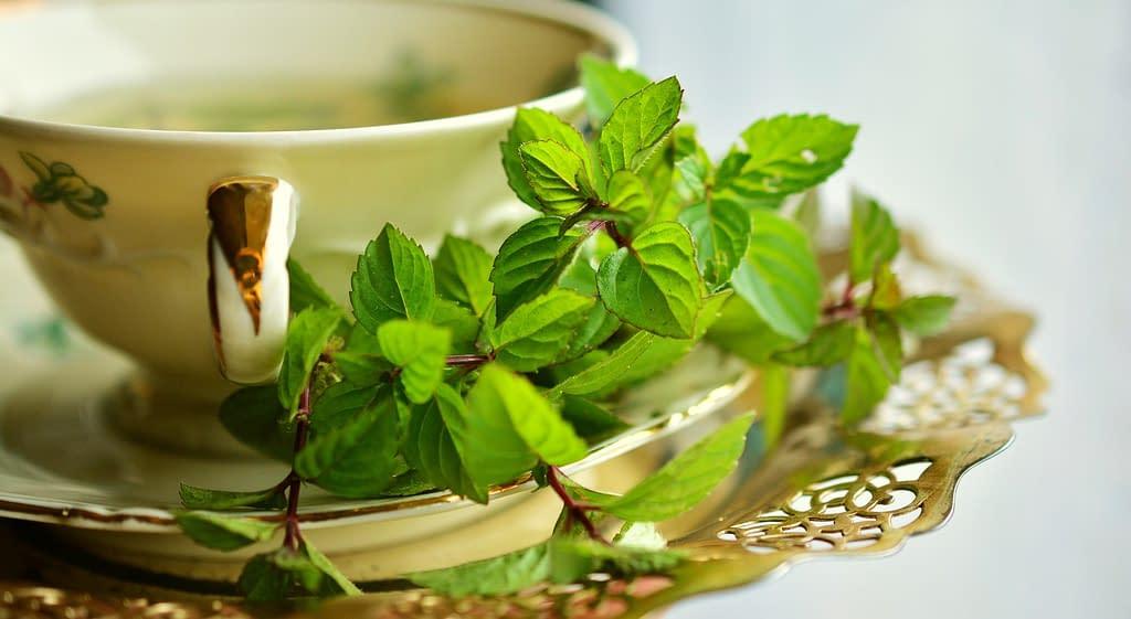te verde - Los  Beneficios de un buen Té